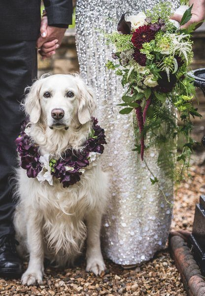 Rescue Dog Gets Starring Role in Owners' Wedding Day