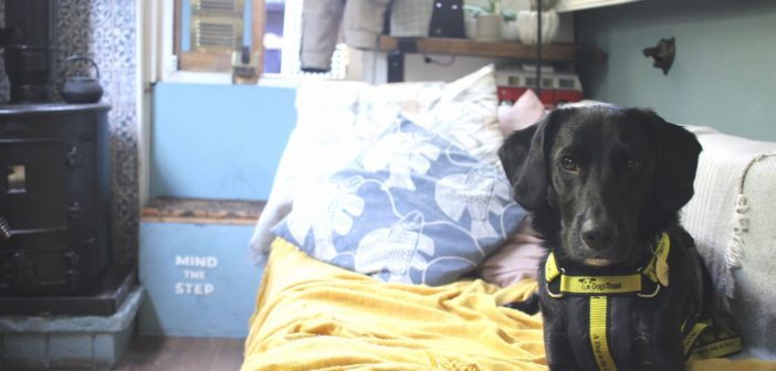 It's All Paws on Deck for Rescue Dog Who is Loving His New, Unusual Home