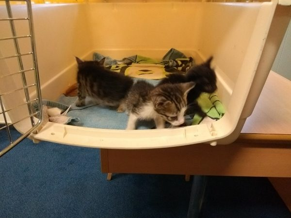 Kittens Survive 2,000 Mile Voyage From Cyprus to the UK in a Locked Car
