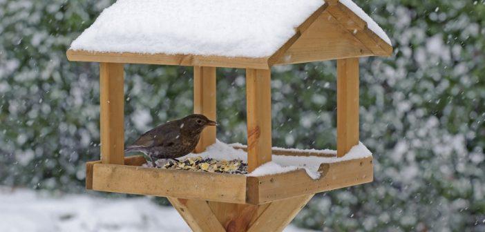 9 Top Tips to Get Your Garden Birds Through the Cold Winter