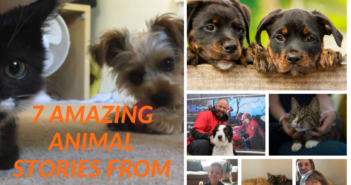 7 Amazing Animal Stories From 2018