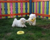 Puppies Have New 'Puppy Palace' to Enjoy Until They Find Their Forever Home