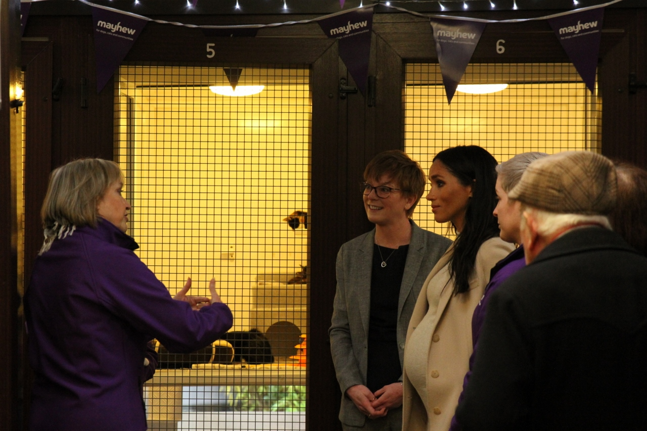 Mayhew's relationship with local school gets 'royal seal of approval', as The Duchess of Sussex meets kittens discovered in Head's shed