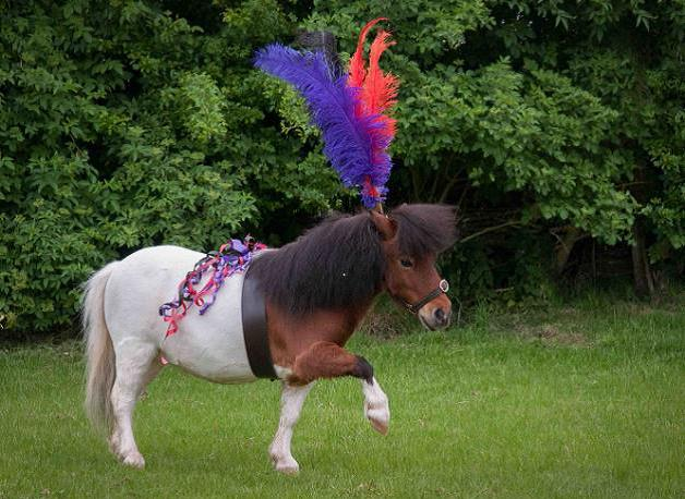 Shetland Pony is a Bridesmaid For The Day!
