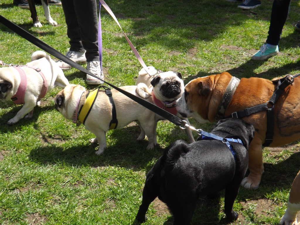 All Dogs Matter - The Great Hampstead Bark Off