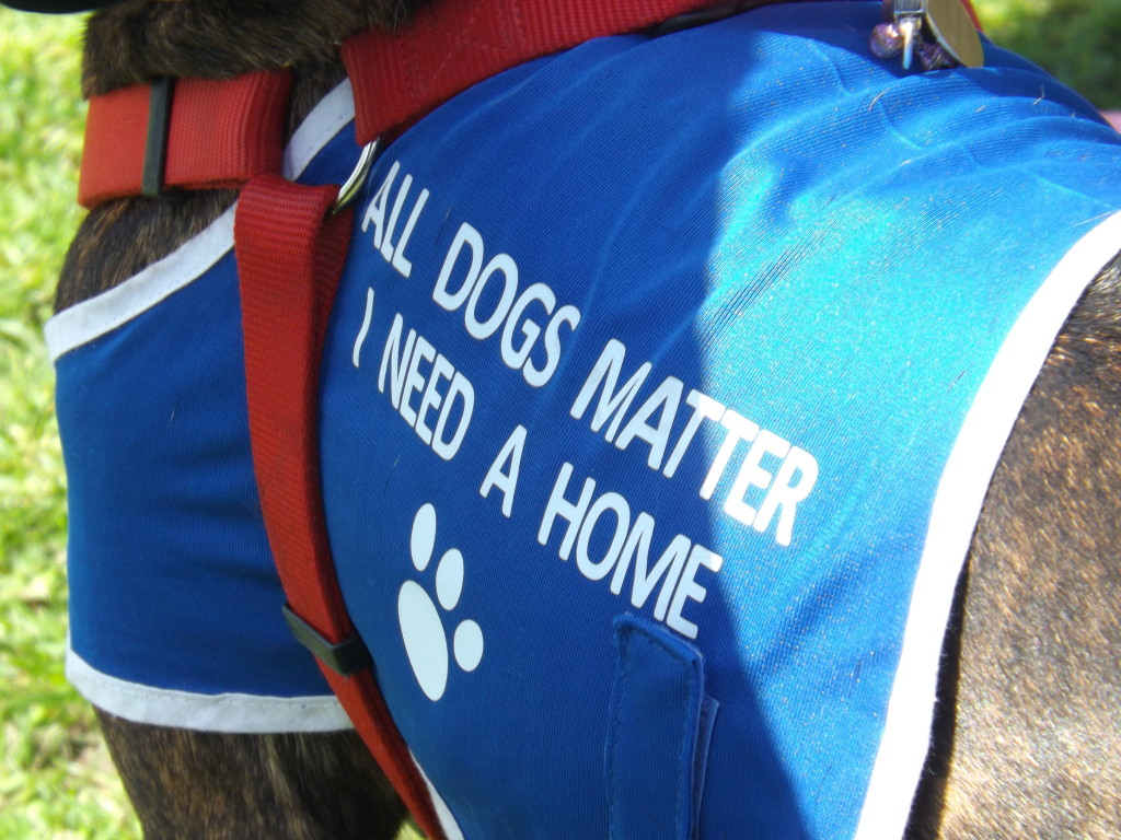 All Dogs Matter Hampstead Bark Off