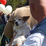 All Dogs Matter - Great Hampstead Bark Off