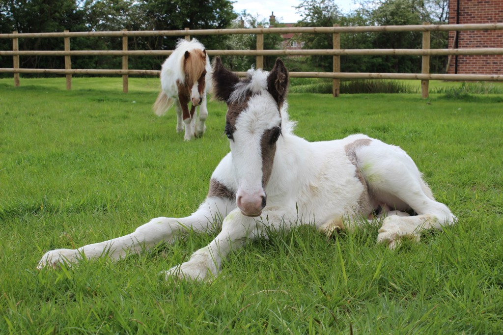 Amazing Animal of the Month: Moses the Foal