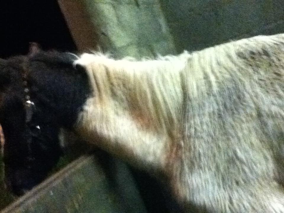 Amazing Animal of the Month: Bernard, RSPCA