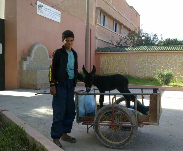 SPANA: A SICK DONKEY FOAL THAT WAS ABANDONED AT A SOUK IN CHEMAIA, MOROCCO, HAS FOUND A NEW HOME WITH THE BOY WHO RESCUED HIM.