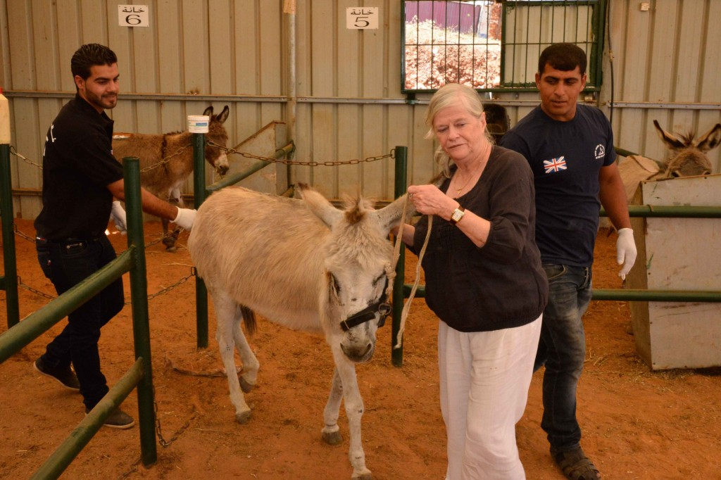 SHADH - Safe For Life: Ann Widdecombe Visits Donkey Charity