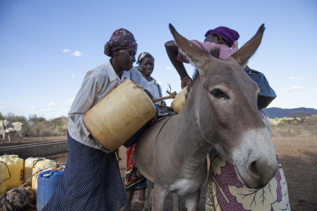 Donkeys Saving Lives