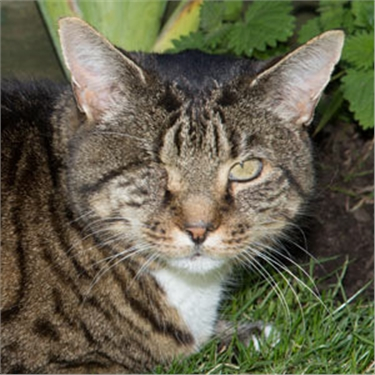 One-Eyed Former Stray Wins Cat Of The Year Award Cats Protection