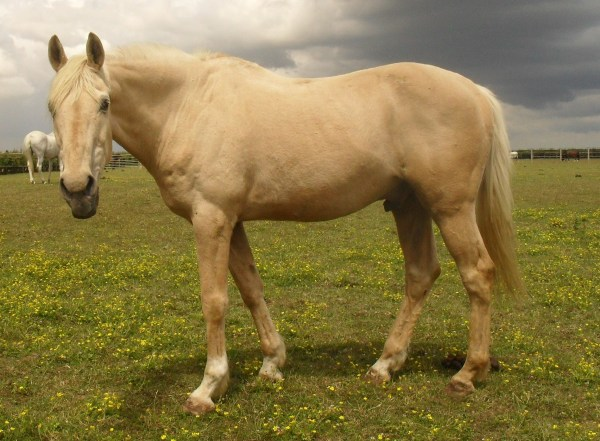 Laddy the Horse, Redwings Horse Sanctuary