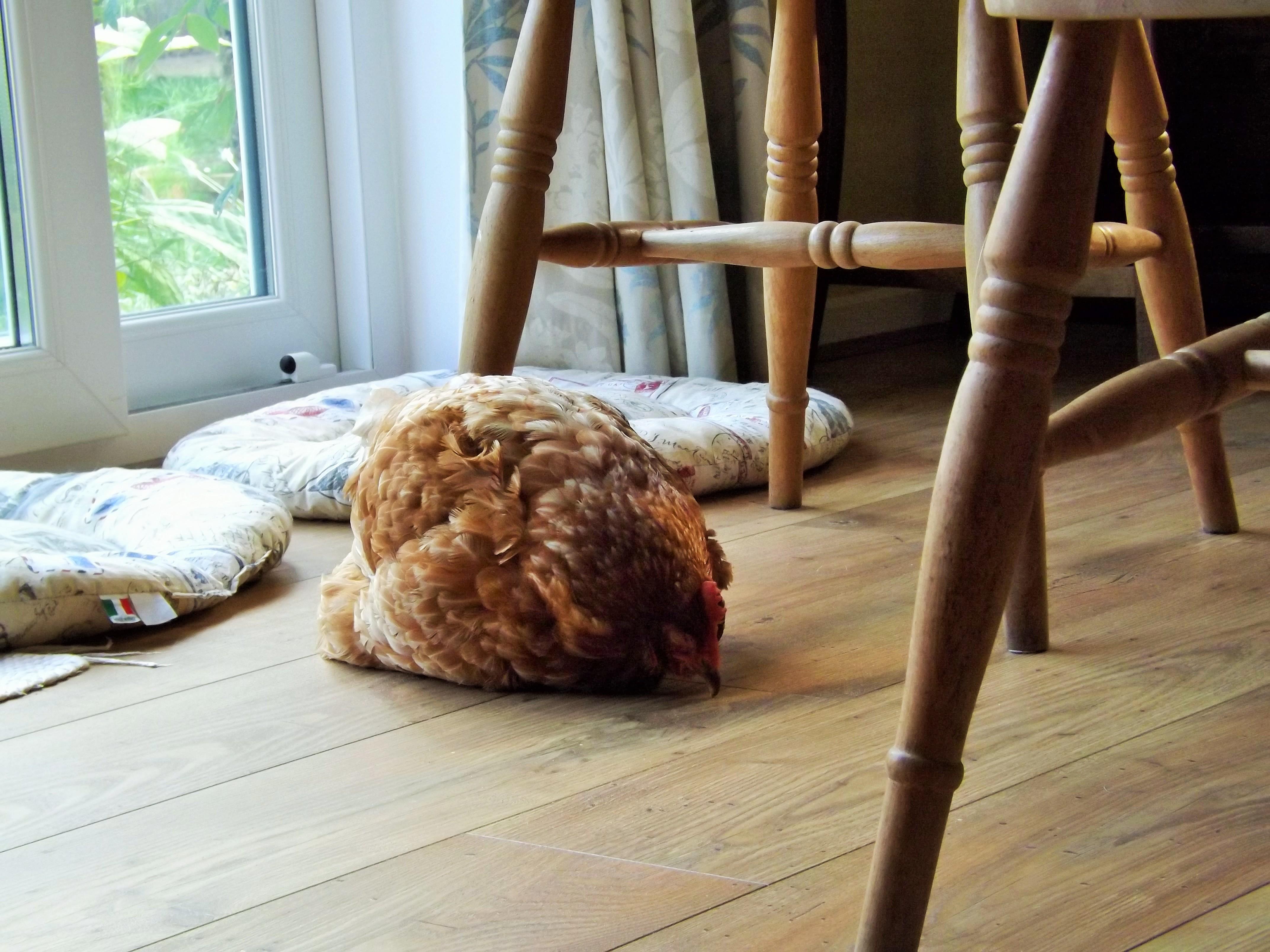 Effie snoozing