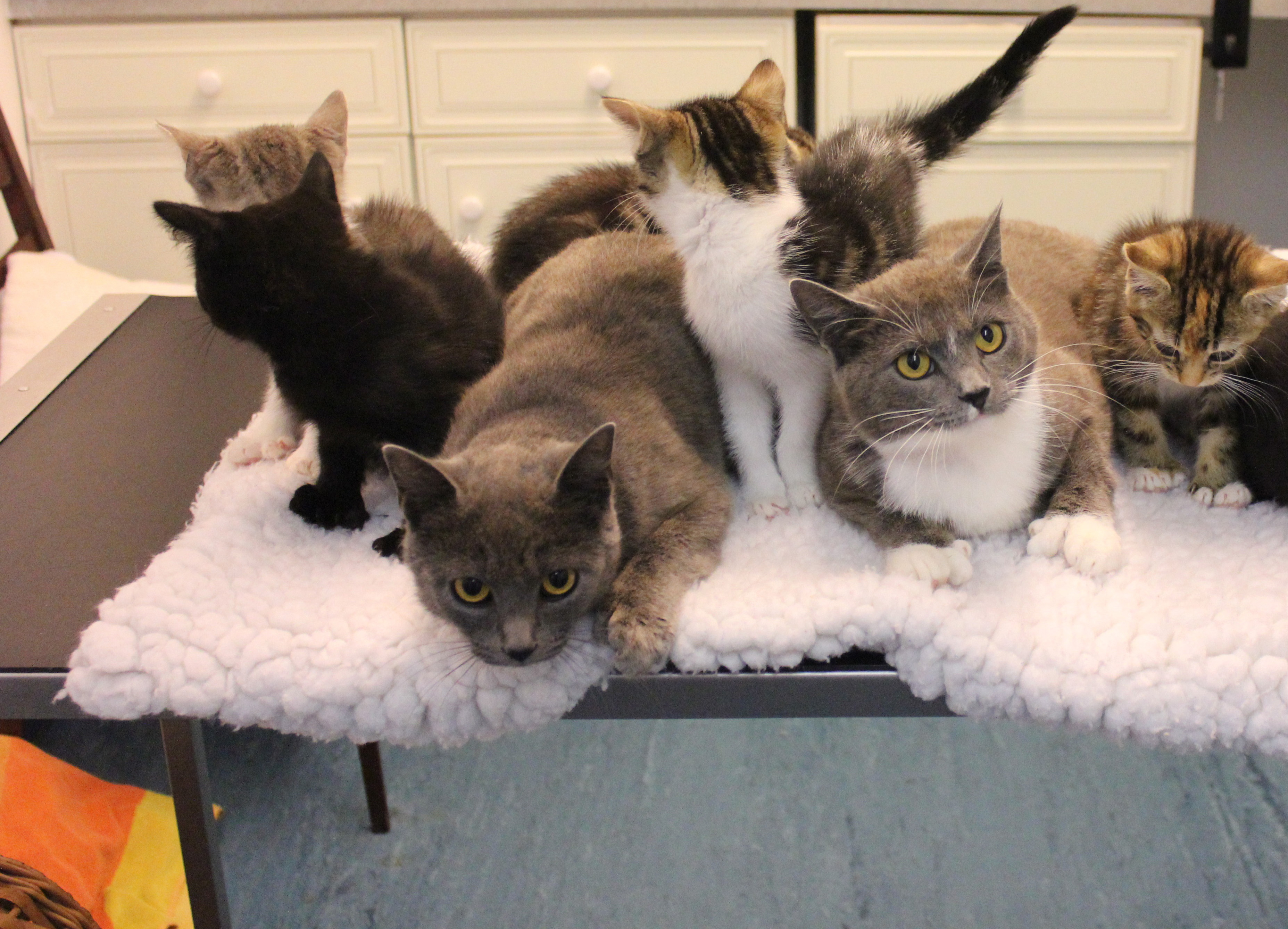 Abandoned Polydactyl Cats With 180 Toes Between Them