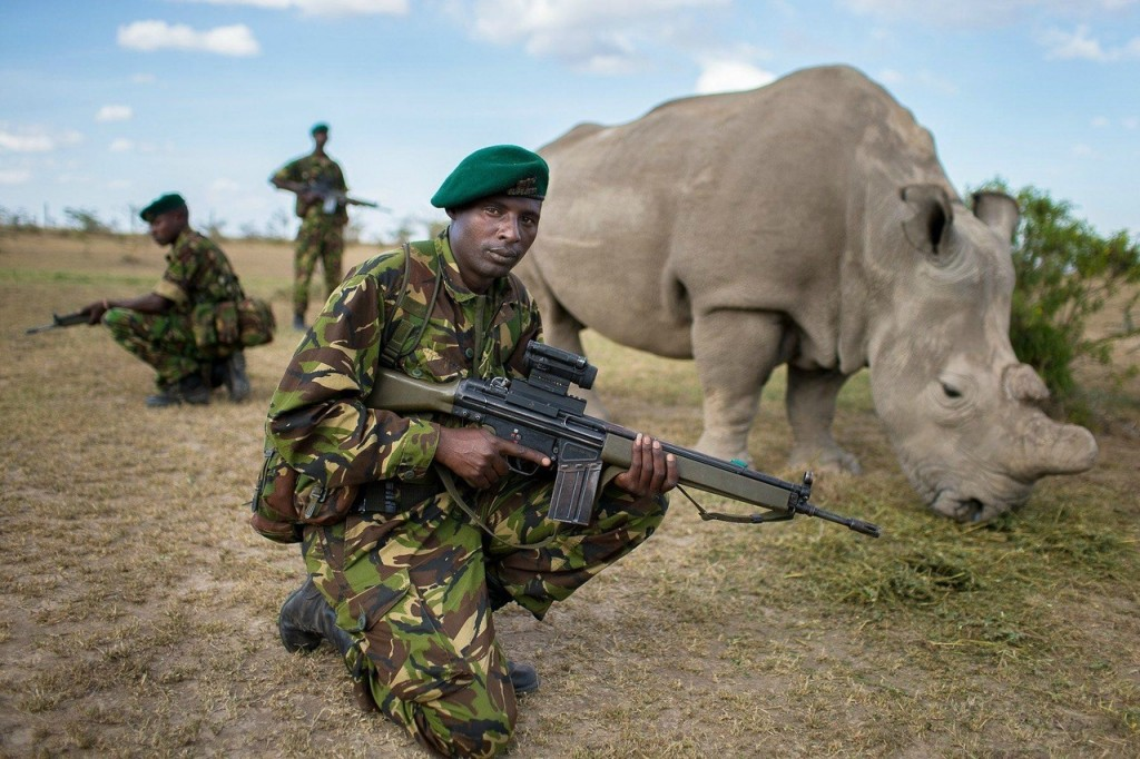 Astonishing Facts About Rhinos - Modern Day Dinosaurs