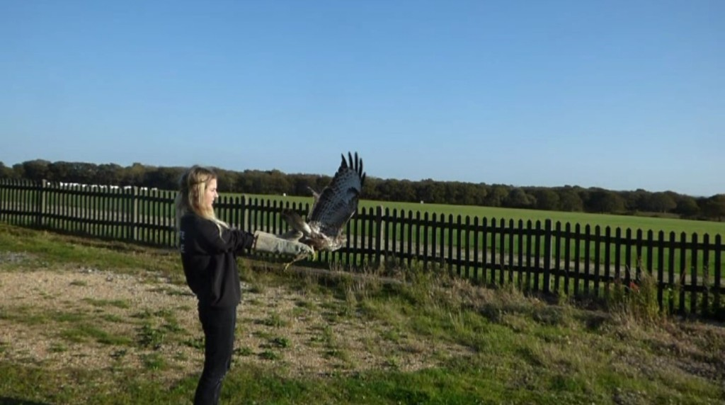 That Magical Moment When You Go Home: Rescued Buzzard Released Back into the Wild