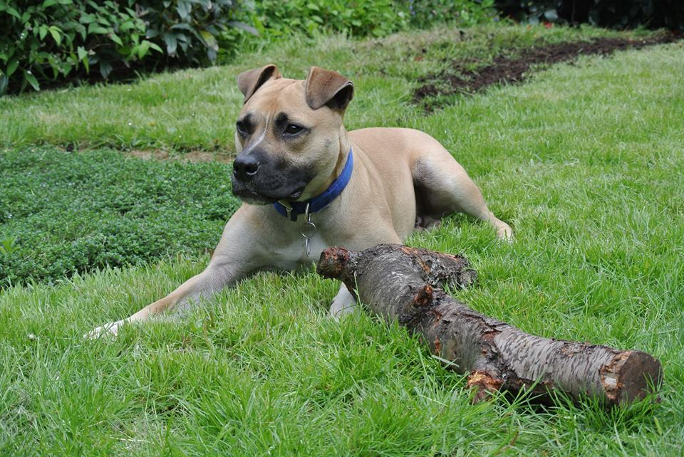 Battersea Dogs Home Find Home for Longest Resident