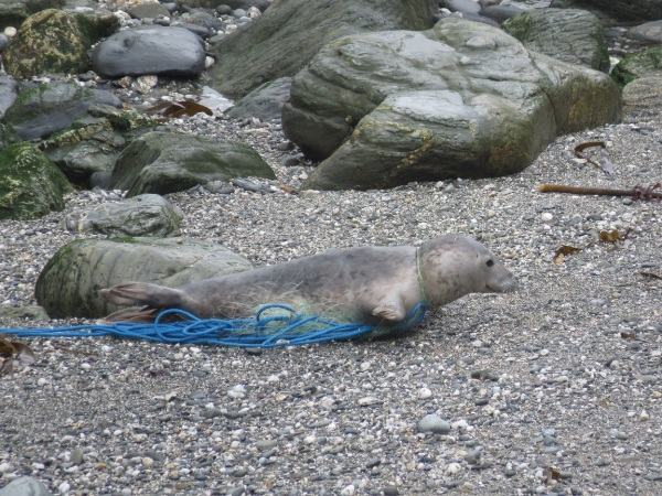 Seals Given Second Chance at Life