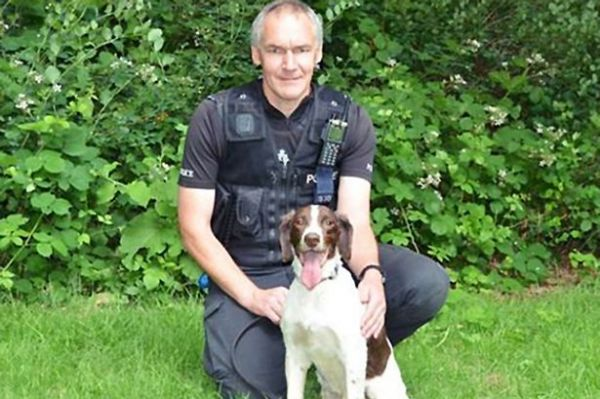Springer Spaniel Police Dog Jake gets Award for Outstanding Service