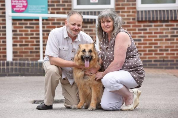 Looby Loo, a Heroic German Shepherd Rescue Dog