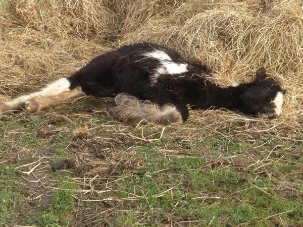 Gorgeous Foal Frodo Overcomes the Odds After Almost Freezing to Death