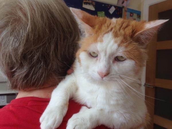 Cat Survives Rare Life-Threatening Condition