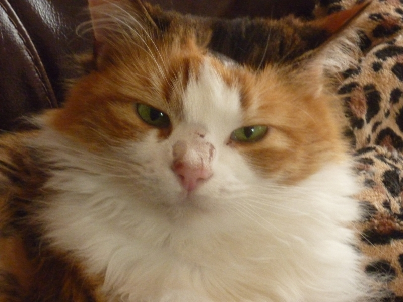 Cat Survives Rare Life-Threatening Condition