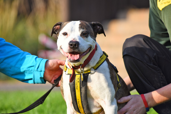We might have Britain's happiest dog