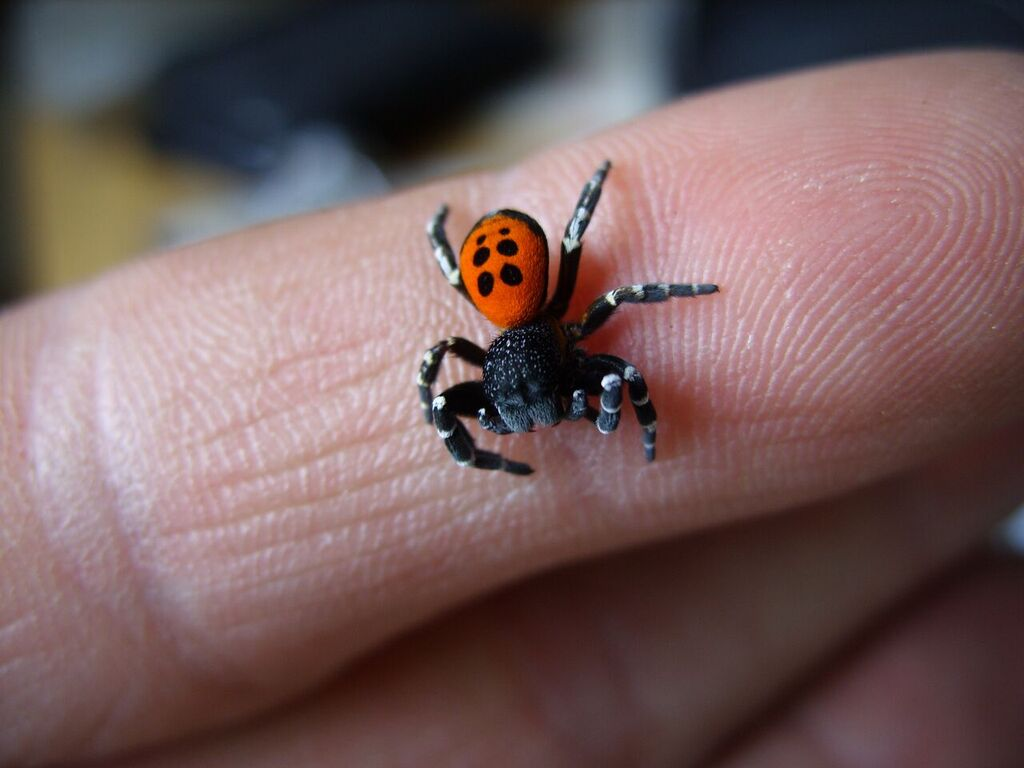 Festively-dressed spider doing well in new home