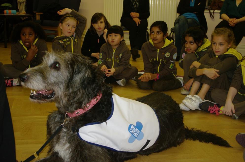 Enormous Irish Wolfhound Teaching Children About Dog Safety
