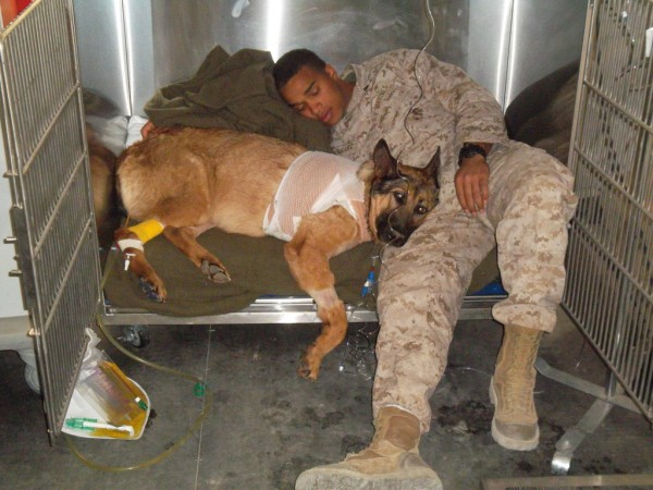 Marine Corps dog Lucca awarded Medal for her service in Afghanistan and Iraq