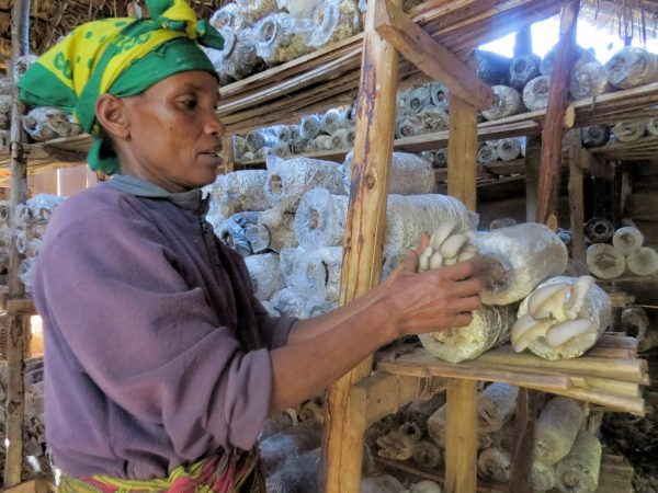 Mushrooms helps Tanzanian farmers protect forest