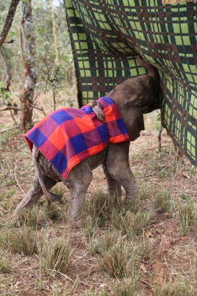 A Day in the Life of an Elephant Keeper at the David Sheldrick Wildlife Trust
