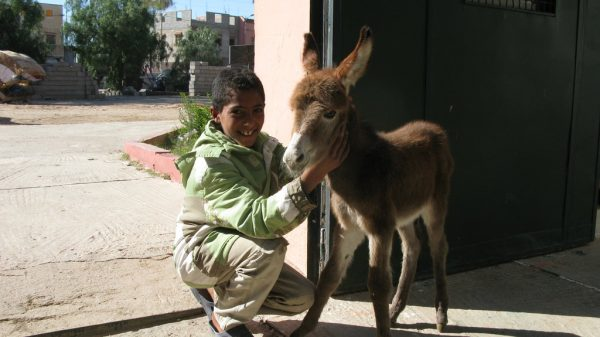 Brave Donkey Protects Her Foal
