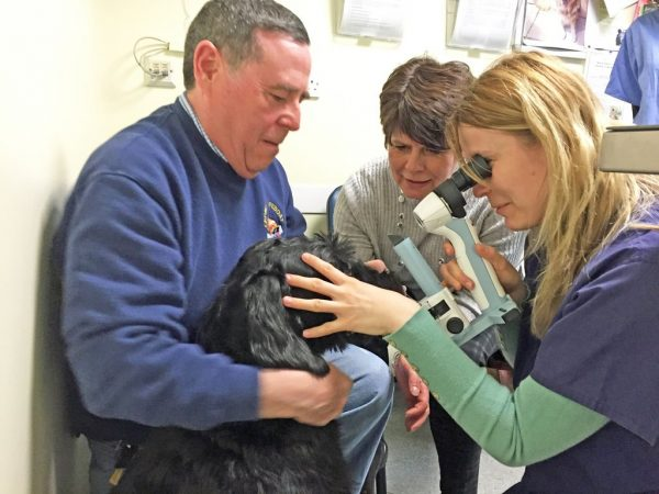 Giant Schnauzer Who Suddenly Went Blind Astounds Vets By Regaining Sight
