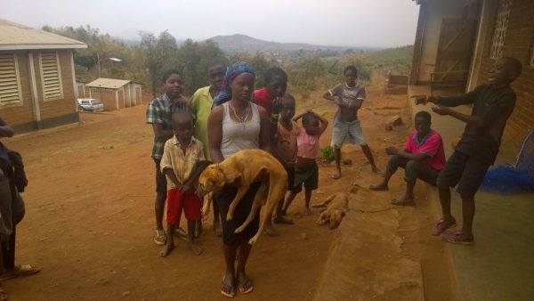 80% of Dogs in Malawi City Vaccinated in 10 Days