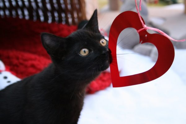 10 Reasons To Adopt A Black Cat