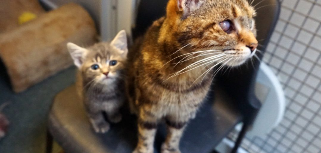 Rescue Mum Cat Takes in Teeny Orphaned Kitten