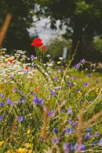 Wild Flower Project Gives Refugees Hope and a Friendly Environment