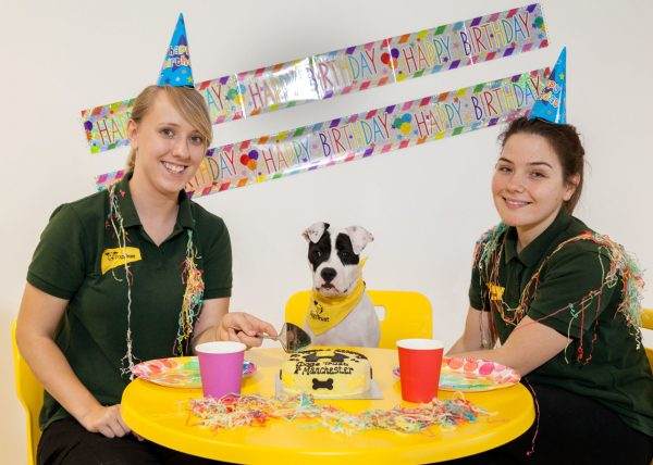 Dogs Trust Manchester throw special party for deaf pup to celebrate their second birthday