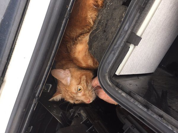 Cat found in engine is back helping young diabetic owner