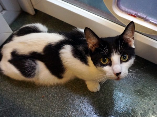 Black and White Cat and her kittens saved by kind-hearted local resident