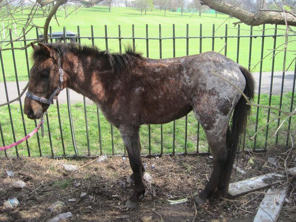 Abandoned Pony with Horrific Mystery Wounds Makes Amazing Recovery!