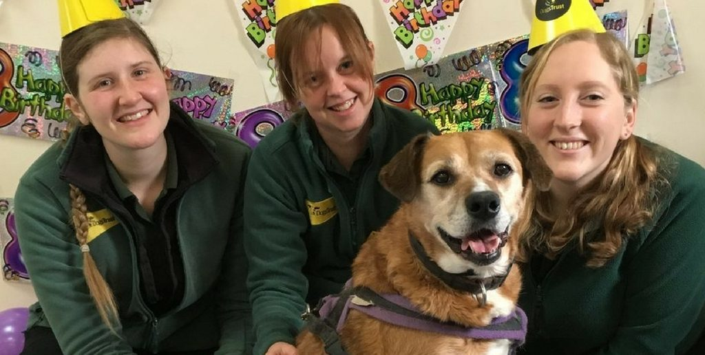 Dogs Trust Throw Special Birthday Party for Molly, Whose Forever Home is the Rehoming Centre