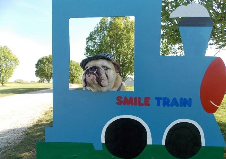 English Bulldog Stanley Shows the World Being Different is OK