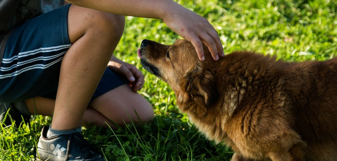BorrowMyDoggy: Bringing dog owners and dog lovers together to share the care