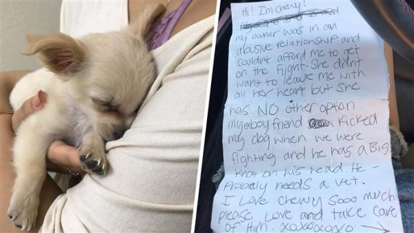 Puppy Left at Airport Receives Love and Adoption Offers