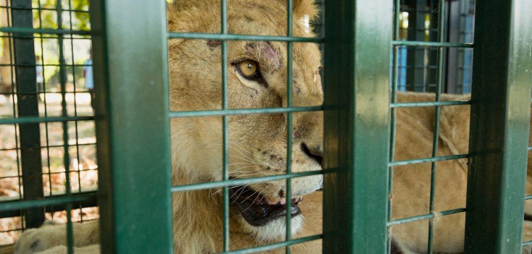 Animals Successfully Evacuated From Zoo Near Aleppo